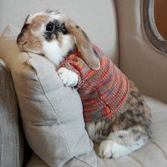 "It's a sweater ""Bunny Day"" over here Mollie! Cute Baby Bunnies, Funny Bunnies, Cute Baby Animals, Animals And Pets, Cute Babies, Funny Animals, Vida Animal, Bunny Care, Hamster"