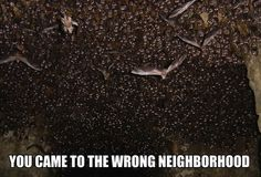 Unless you like bats, and then it's the right neighborhood