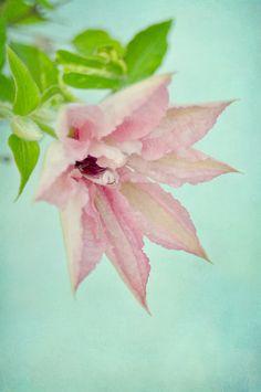 'delicate pink' Art Print by Iris Lehnhardt on society6