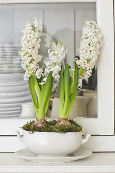 Hyacinth brings spring from outside into inside and used for the interior as decoration for the coming Easter and spring. Check out these wonderful ideas and get inspired. Indoor Garden, Indoor Plants, White Flowers, Beautiful Flowers, Shabby Flowers, White Hyacinth, Garden Bulbs, Spring Bulbs, Bulb Flowers