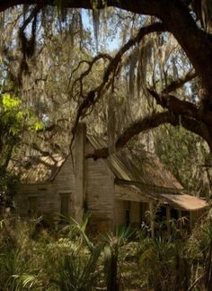 deep in the heart of Louisiana...what sad stories the weeping willows tell when the Gulf winds blow!
