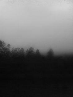 morning light - Marina Caverzan Fog-tree