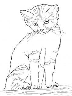 Cute Kitten  Super Coloring  Being a Kid   Pinterest  Cats