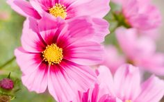 Resultado de imagem para цветы на рабочий стол