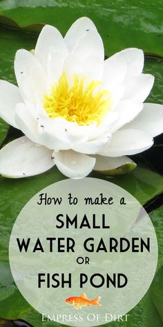 Easy advice for starting a little garden pond in your yard or on your patio. Shows everything you need to get started. Simple! #spon