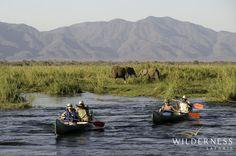 Ruckomechi Camp - Canoeing down the mighty Zambezi is always rewarding!  #Africa…