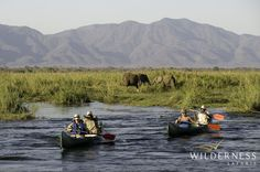 Ruckomechi Camp - Canoeing down the mighty Zambezi is always rewarding!  #Africa #Safari #Zimbabwe #WildernessSafaris