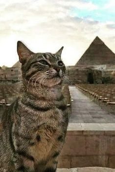 Cats In Ancient Egypt, Egypt Cat, In Ancient Times, Pretty Cats, Beautiful Cats, Cute Cats, Funny Cats, Pretty Kitty, Adorable Kittens