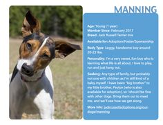 Handsome man Manning is ready to rescue your heart! #Adoptable #JackRussell #Georgia