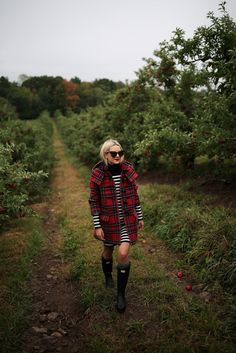 apple picking // fall