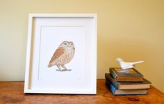 Owl print / picture. Art print of an original watercolour illustration of a Little Owl. Owl drawing. Owl artwork. Nature lover present. Just £20.