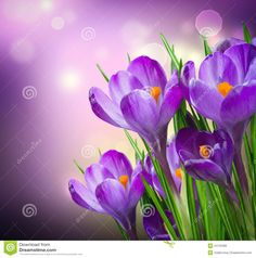 Free art print of Crocus Spring Flowers. Get up to 10 Gallery-Quality Art Prints for Free. Stock Background, Background Images, Free Art Prints, Canvas Art Prints, Flower Coloring Pages, Holiday Photos, Diy Painting, Painting Flowers, Watercolor Painting
