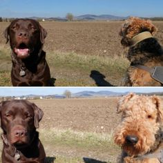 """Today I wanted to show you a photo with both of my dogs . I got my camera and tried to take a nice picture so I said: """"Smile!"""" and yes they smiled but Berti wasn't interested in looking at the camera... """"Okay maybe I have to be more precise."""" I thought . So I said :""""Look at me!"""" And then I got this double stare. Perhaps it was not the day for a perfect picture. Leave me a comment and tell me if it was a day for a perfect photo for you!"""
