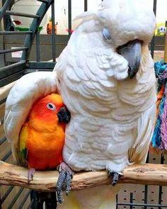 Mothers Love Cute Baby Animals, Funny Animals, Parrot Pet, Pet Corner, Conure, Tier Fotos, Cute Birds, Cockatoo, Funny Animal Pictures