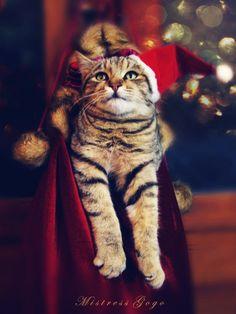 Feel like singing Santa Baby