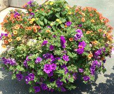 Planter arrangement for the garden