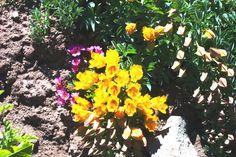 Flores silvestres en la Cordillera de los Andes