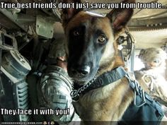 Crying Soldier with Dog | Has A Hotdog - soldier - Loldogs n Cute Puppies - funny dog pictures ...