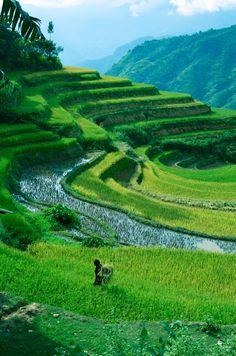 Rice paddle field in Hoang Su Phi Ha Giang Vietnam. [OC] [2448 x 3696]