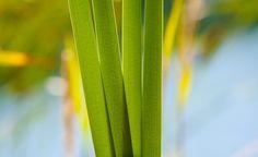 Photo Credits:  Imagebase Free Stock Photography  > Subscribe To  http://onlinephotobuddy.com > Green Lines #symetryinphotography #photography