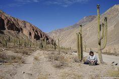 Bosque de Cactus de Judiopampa. Ubicado en el Cañon de Cotahuasi, en la región Arequipa, Perú.