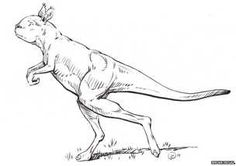 Giant kangaroos used to walk on two legs. Marsupial T-rexes haha.
