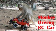 News Videos & more -  Watch the Funniest Videos on youtube - How To Make Fun With Monkeys   Everyday Monkey Funny YouTube Videos From Cambodia #Funny #videos on #youtube #Music #Videos #News Check more at http://rockstarseo.ca/watch-the-funniest-videos-on-youtube-how-to-make-fun-with-monkeys-everyday-monkey-funny-youtube-videos-from-cambodia-funny-videos-on-youtube/
