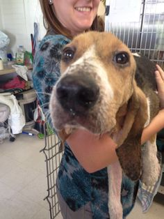 Dying Puppy Found Alone In Forest Makes Miracle Transformation - The Dodo Animal Rescue Stories, Adoption Stories, Puppy Cam, Animals And Pets, Cute Animals, Puppy Find, Bassett Hound, Shih Tzu, Rescue Dogs