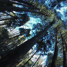 【schwarze_d】さんのInstagramをピンしています。 《◇ 一点に向かって ◇ 過日のphotoです。印象的だったので撮ってみました。 . ここにまた行きたくて仕方がありません。 ◆ #ファインダー越しの私の世界  #写真好きな人と繋がりたい  #love #beautiful #ig_daily #igshot  #ig_photo  #gopro #goprojp #goprohero5  #goproのある生活 #森 #forest #青い世界 #夕暮れ前 #冬 #winter #冬の光景 #ひかり #太陽の光  #Thereisneverthesamemoment》
