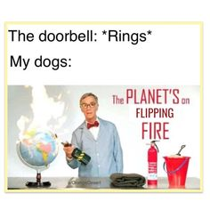 What the dogs think when the doorbell rings.