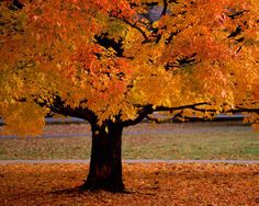 Autumn Leaves Falling | Inglês no Jardim de Infância