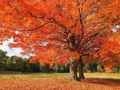 "52 Likes, 4 Comments - Jen Trebino Wyllie (@jennisalami) on Instagram: ""they're literally glowing. she's always been my favorite. #autumn #mynewenglandfall #favoriteseason…"""