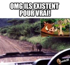 if you are a fan of> share with your friends! Humour Disney, Disney Memes, Disney Films, Disney Art, Best Memes, Funny Memes, Jokes, Funny Animal Pictures, Funny Animals