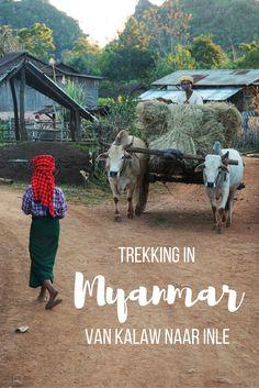 Trekking over Myanmars platteland. Langs velden vol pepers en mosterdblad, vriendelijke mensen en traditionele dorpjes. Lees over deze bijzondere tweedaagse trekking van Kalaw naar Inle meer op Travelosophy.