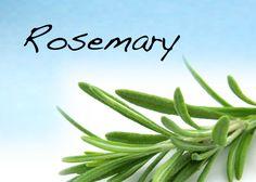 How to use Rosemary in Magic, samanthamarswriter.blogspot.com.au