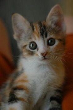 Little face!