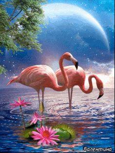 Фламинго - анимация на телефон №1323738