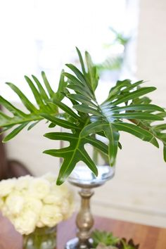 like the idea of some of these cut from my own backyard- xanadu philodendron