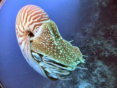 Aquatic life - Wild life