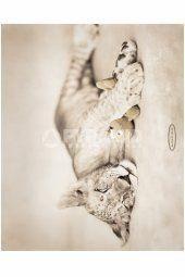 Rachael Hale (Arjuna and Teddy) Mini Poster Posters, Statue, Mini, Art, Art Background, Kunst, Poster, Performing Arts, Billboard
