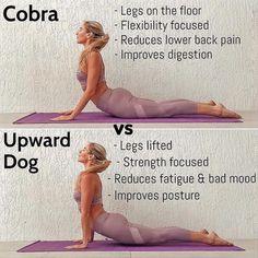Cobra be downdog pose yoga Yoga Beginners, Pilates, Yoga Nantes, Yoga Am Morgen, Upward Dog, Yoga Lyon, Yoga Posen, Pranayama, Yoga Tips