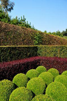 East Ruston Old Vicarage, Norfolk Garden Hedges, Topiary Garden, Topiaries, Modern Garden Design, Landscape Design, Outdoor Landscaping, Outdoor Gardens, Fancy Fence, Hedge Trees