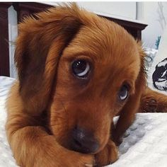 Puppy dog eyes <3
