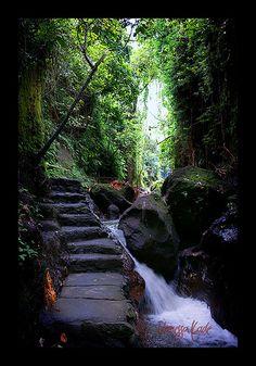 Monkey Forest in Ubud, Bali, Indonesia. Bali Places To Visit, Places To Travel, Places To See, Bali Lombok, Bali Holidays, Waterfall Fountain, Gili Island, Ubud, Monkey Forest