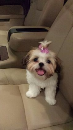 Love!! This is the spitting image of my baby girl when she was a puppy!!!