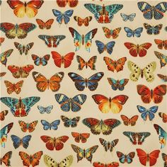 butterfly & gold fabric by Robert Kaufman from the USA
