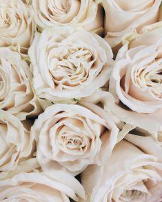 Playa Blanca Blush Flowers, Pretty Flowers, Colorful Flowers, Flower Bouquet Wedding, Floral Wedding, Wedding Wholesale, Rose Varieties, Types Of Roses, Flower Names