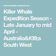 Killer Whale Expedition Season - Late January to mid April - Australia's South West