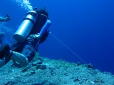 5 Reasons to Use a Reef Hook When Scuba Diving in Palau