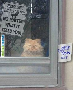 Cat memes When I leave house...